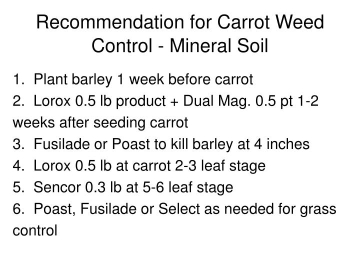 Recommendation for Carrot Weed Control - Mineral Soil