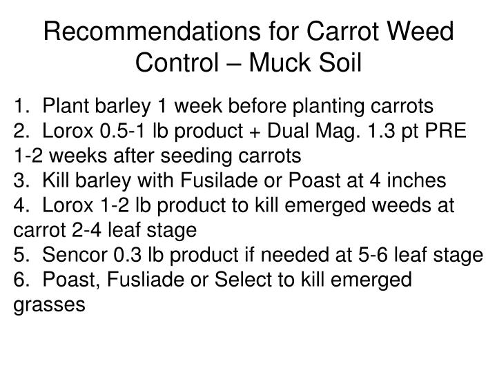 Recommendations for Carrot Weed Control – Muck Soil