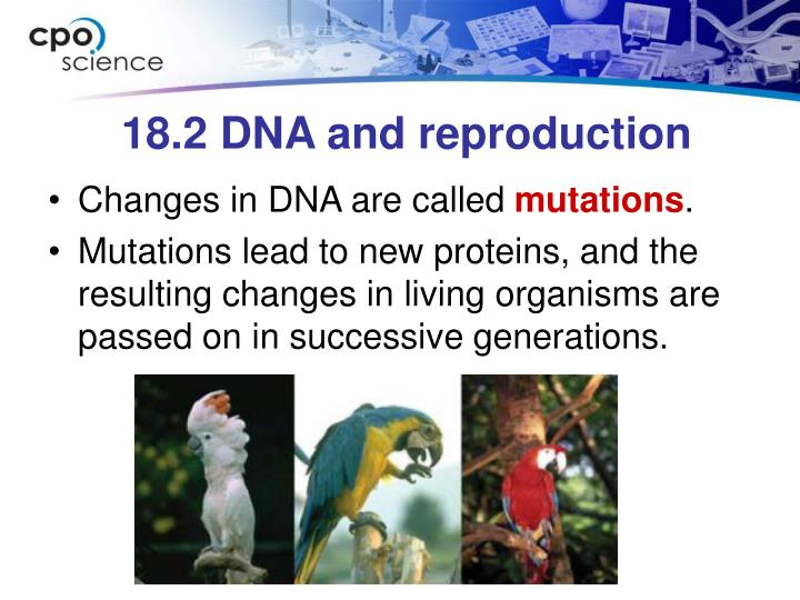 18.2 DNA and reproduction