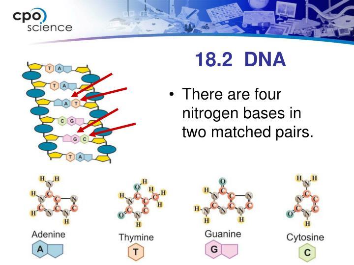 18.2  DNA