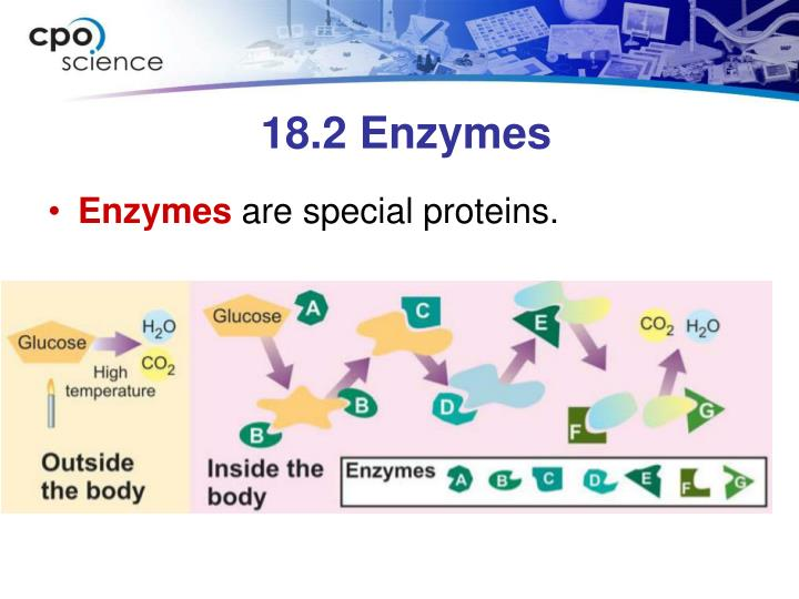 18.2 Enzymes