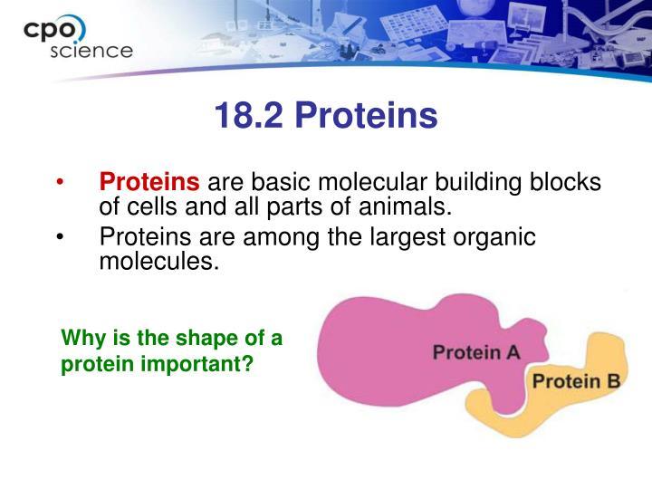 18.2 Proteins