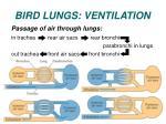 bird lungs ventilation