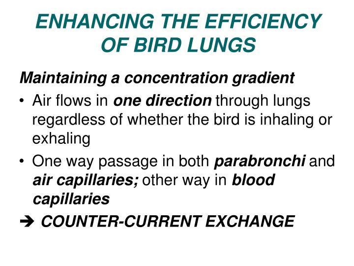 ENHANCING THE EFFICIENCY OF BIRD LUNGS
