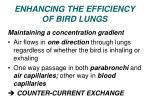 enhancing the efficiency of bird lungs1