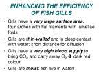 enhancing the efficiency of fish gills