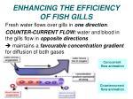 enhancing the efficiency of fish gills1