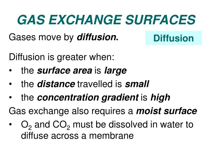 GAS EXCHANGE SURFACES