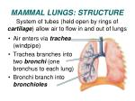 mammal lungs structure