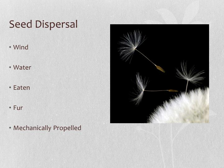 Seed dispersal1