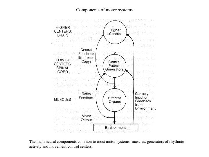 Components of motor systems