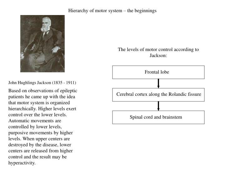 Hierarchy of motor system – the beginnings