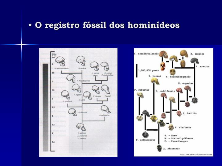 O registro fóssil dos hominídeos