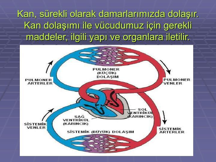 Kan, sürekli olarak damarlarımızda dolaşır. Kan dolaşımı ile vücudumuz için gerekli maddeler, ilgili yapı ve organlara iletilir.