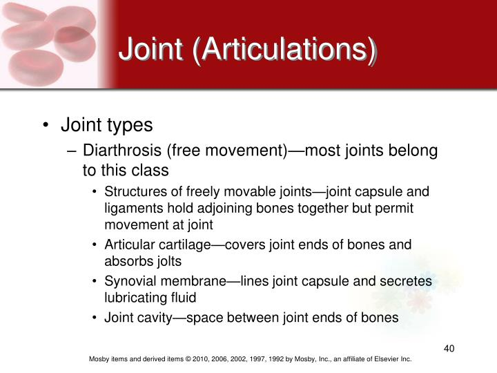 Joint (Articulations)