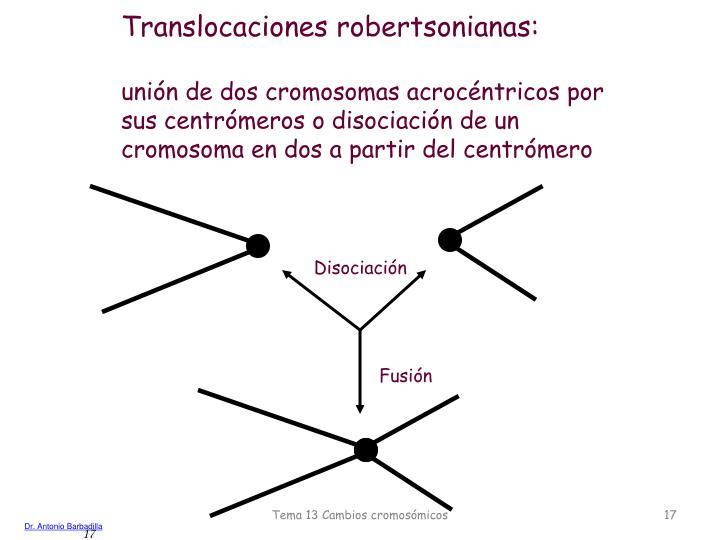 Translocaciones robertsonianas:
