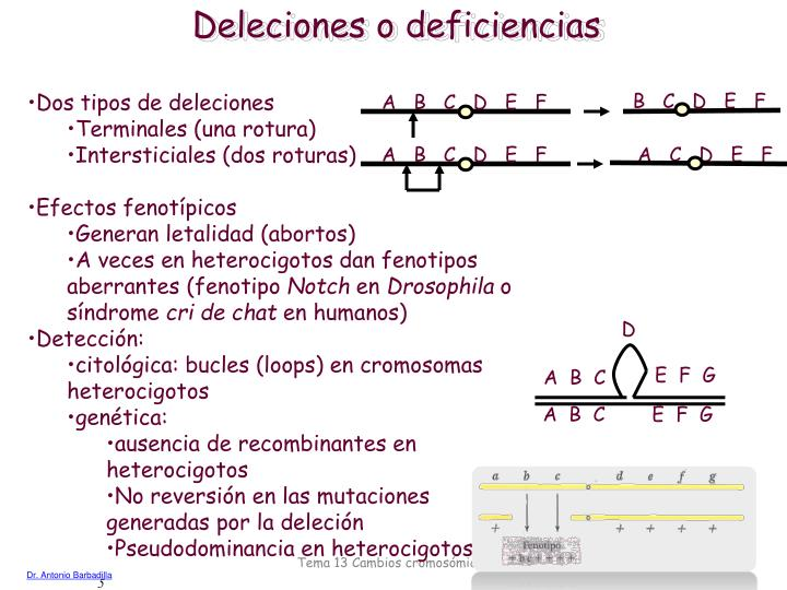 Deleciones o deficiencias