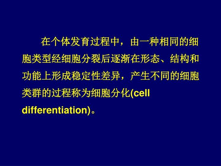 在个体发育过程中,由一种相同的细胞类型经细胞分裂后逐渐在形态、结构和功能上形成稳定性差异,产生不同的细胞类群的过程称为细胞分化