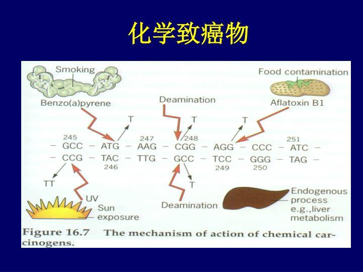 化学致癌物