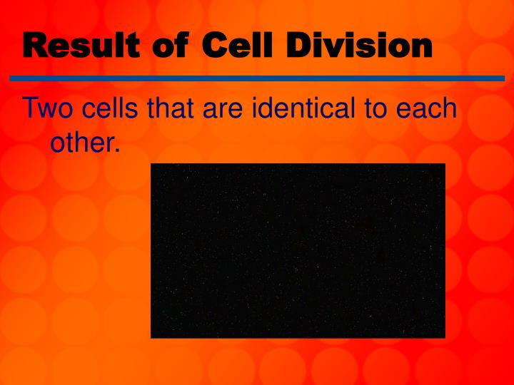 Result of Cell Division