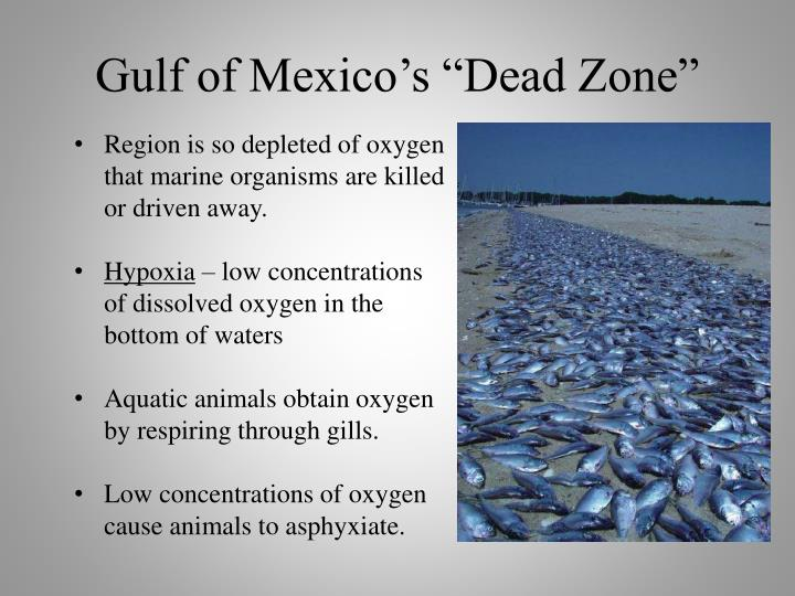 "Gulf of Mexico's ""Dead Zone"""