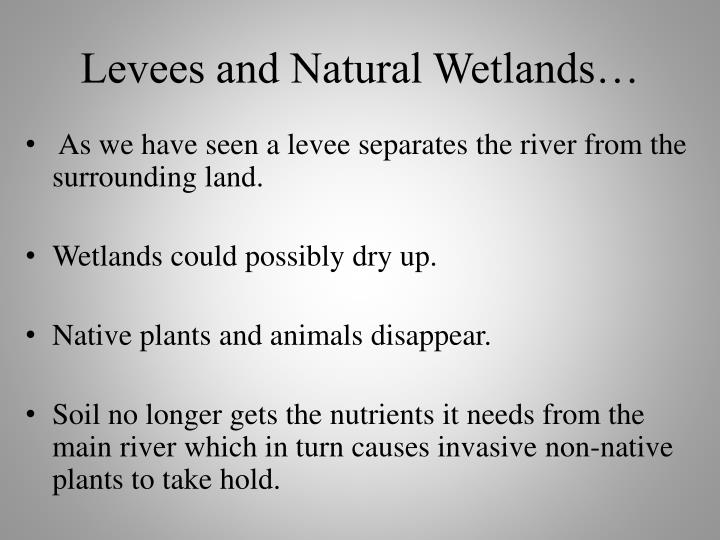 Levees and Natural Wetlands…