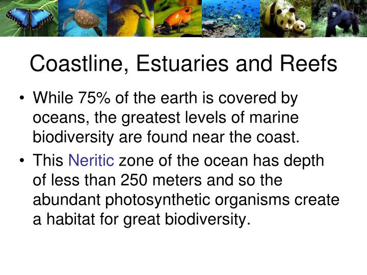 Coastline, Estuaries and Reefs