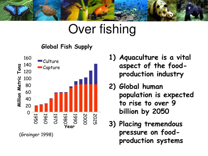 Global Fish Supply