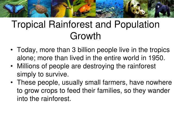 Tropical Rainforest and Population Growth