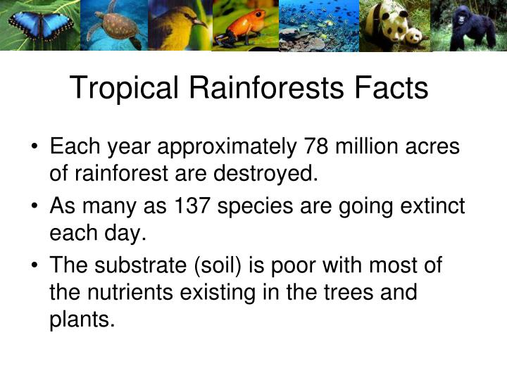 Tropical Rainforests Facts