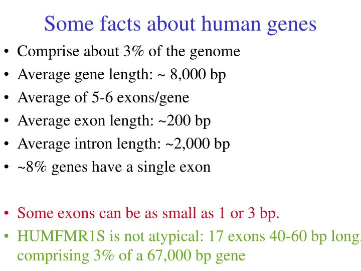 Some facts about human genes