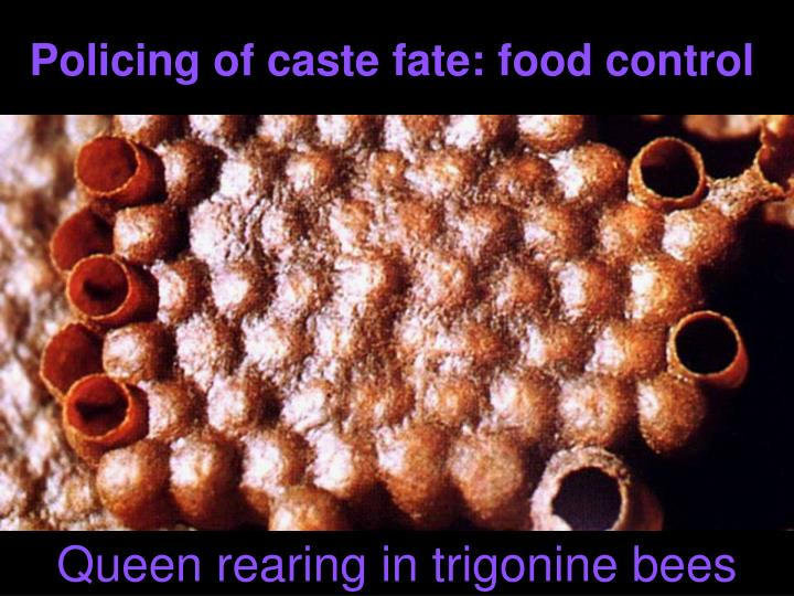 Policing of caste fate: food control
