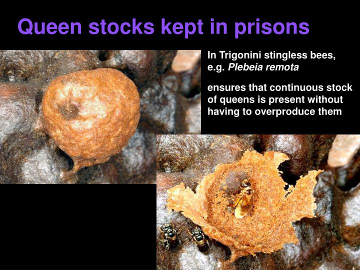 Queen stocks kept in prisons