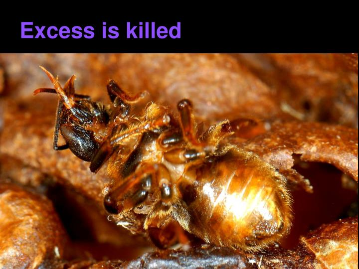 Excess is killed