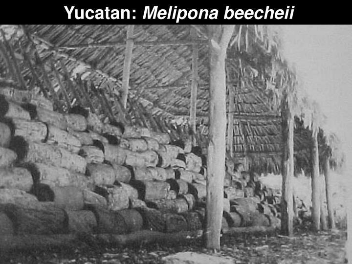 Yucatan:
