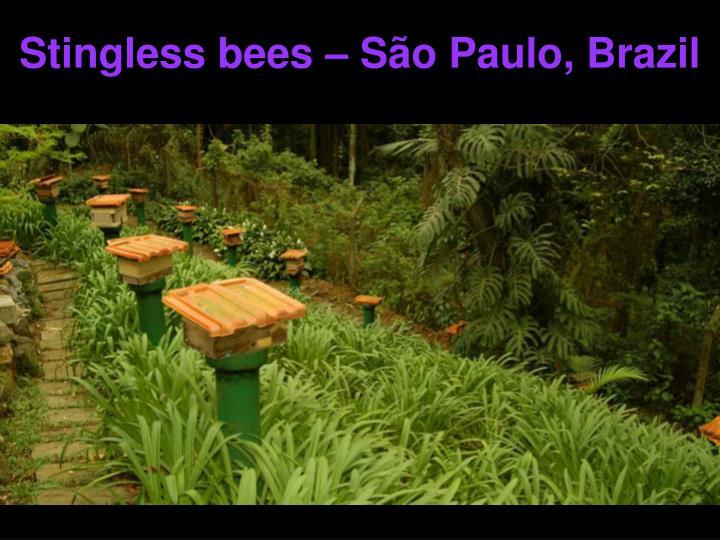 Stingless bees – S