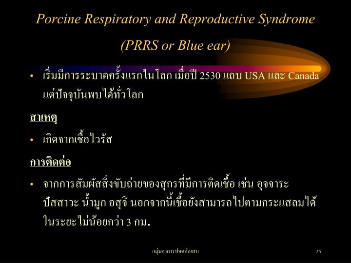 Porcine Respiratory and Reproductive Syndrome (PRRS or Blue ear)