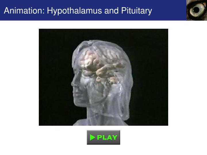 Animation: Hypothalamus and Pituitary