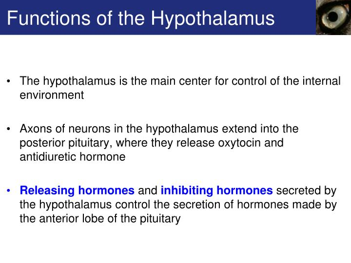 Functions of the Hypothalamus