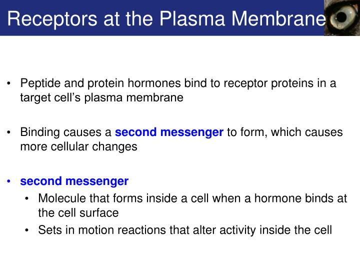 Receptors at the Plasma Membrane