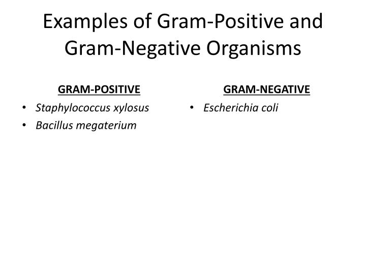Examples of Gram-Positive and Gram-Negative Organisms