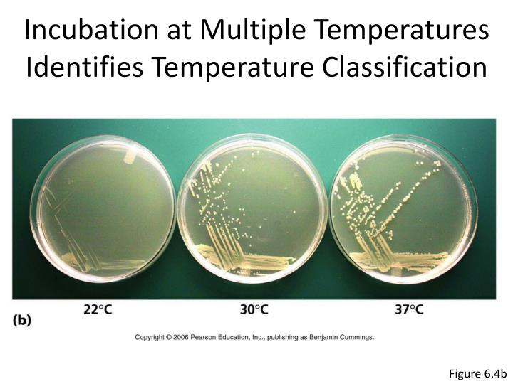 Incubation at Multiple Temperatures Identifies Temperature Classification