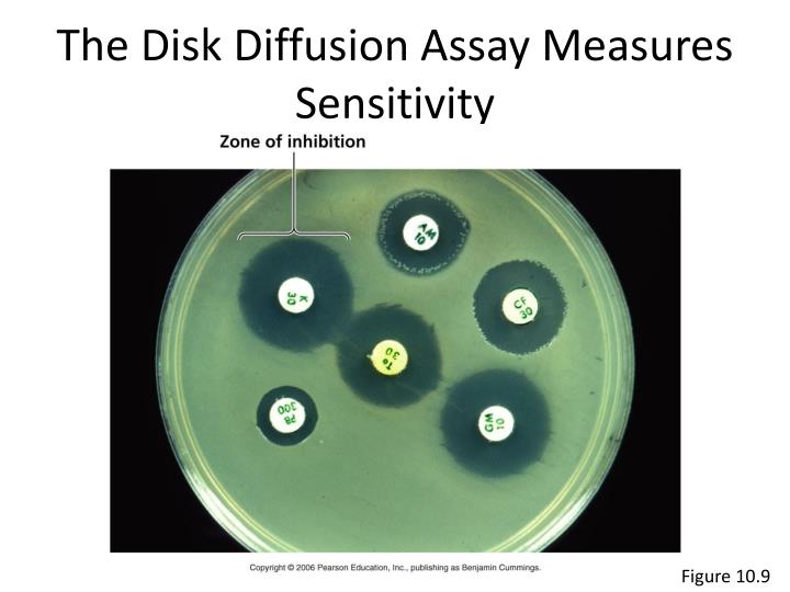 The Disk Diffusion Assay Measures Sensitivity