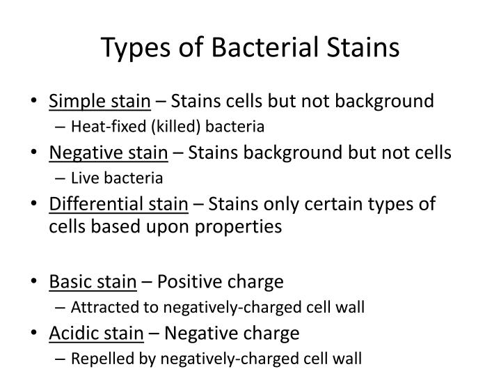 Types of Bacterial Stains