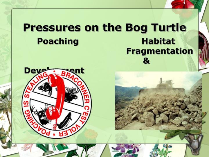 Pressures on the Bog Turtle