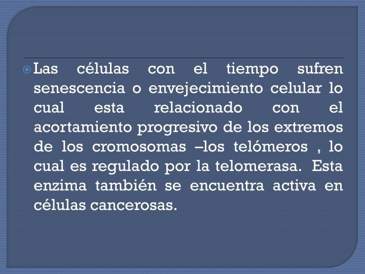 Las células con el tiempo sufren senescencia o envejecimiento