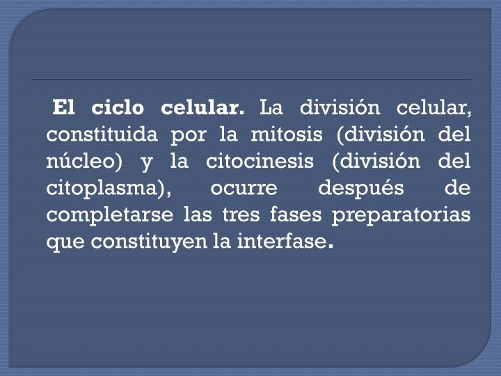 El ciclo celular.