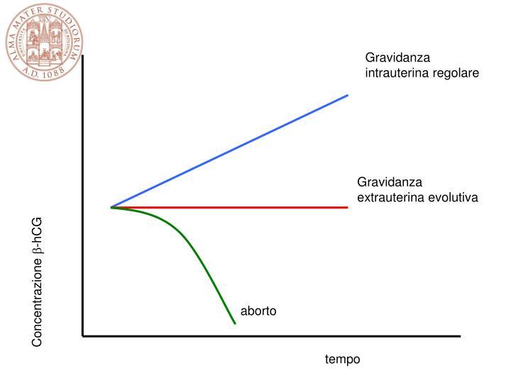 Gravidanza intrauterina regolare