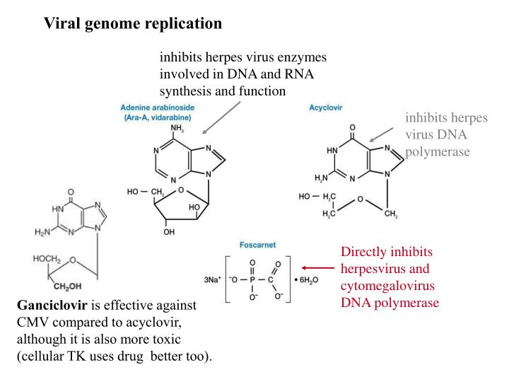 Viral genome replication