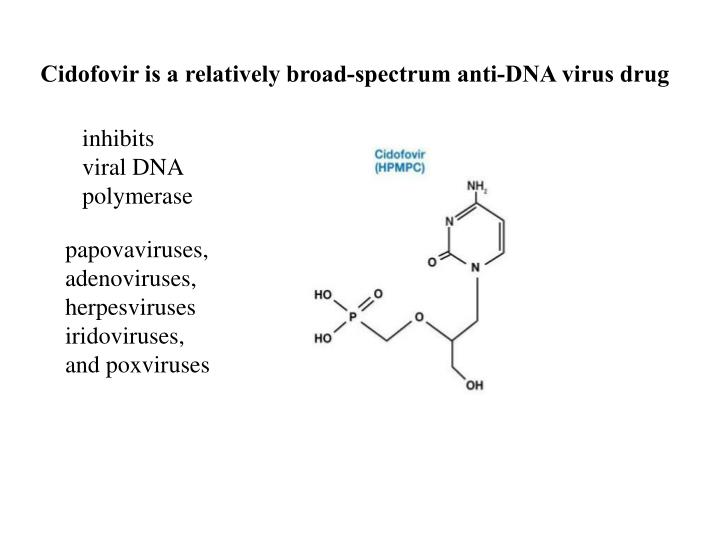 Cidofovir is a relatively broad-spectrum anti-DNA virus drug